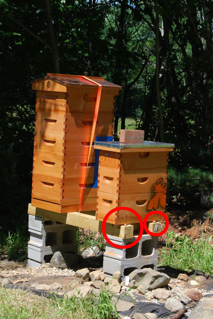 Hive Stand Designs : Bee hive journal help and advice for beekeepers